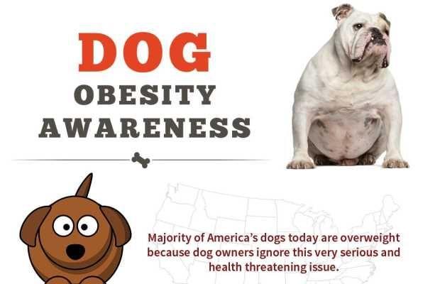 La obesidad perro de la conciencia InfografГa